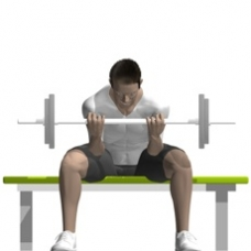 Barbell Concentration Curl Ending Position