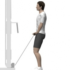 Cable Curl, Standing Starting Position