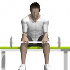 Barbell Wrist Extension Starting Position