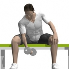 Dumbbell Concentration Curl Starting Position