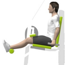 Lever Leg Curl, Seated Starting Position