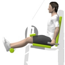 Lever Leg Curl, Seated, Single Leg Starting Position