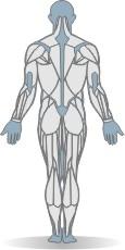 hip flexion supine straight legs mat exercise strength training. Black Bedroom Furniture Sets. Home Design Ideas